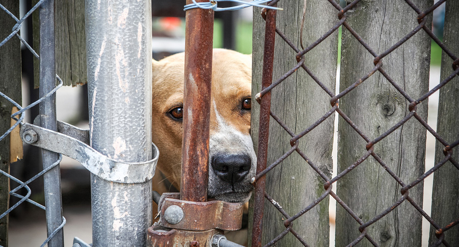 Neglected-dog-behind-fence
